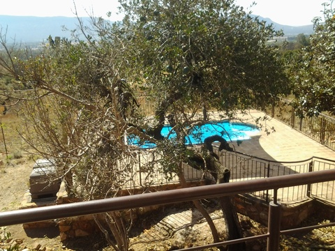 Sky Lodge, Hartbeespoort - View from the deck of the indigeonous Wild Monkey Orange tree and pool