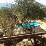 View from the deck of the indigeonous Wild Monkey Organge tree and pool